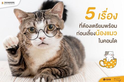 5 เรื่องที่ต้องเตรียมพร้อม ก่อนเลี้ยงน้องแมวในคอนโด